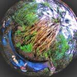 cairns australia rain forest, Queensland, Australia 1.1